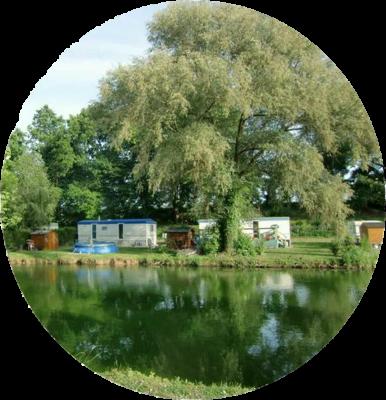 Colvert - Etang de pêche